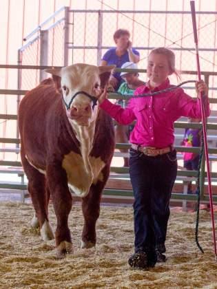 Anna and her fall bull calf.