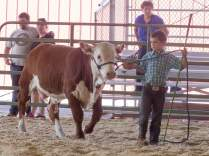 Kade and his bull calf.