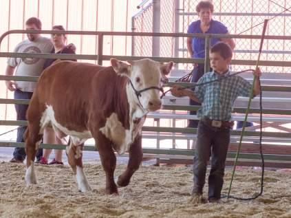 Kade and his bull calf.