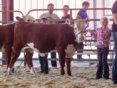 Kendra and her bull calf.