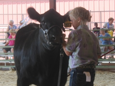 Pepper showing Lacey, another BB Cattle Co heifer. Lacey was the Reserve Champion Angus heifer.