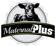 maternalpluslogo