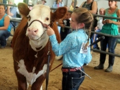 Anna with her fall heifer, Little Red. Anna got second in her class and third in showmanship