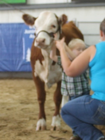 Jaxsen showing Honey Bee. Honey Bee is a fall heifer from BB Cattle co.