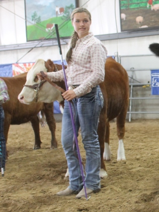 Sabrinia with a Hank and Linda Helson heifer. Hank and Linda have gret polled Hereford cattle.
