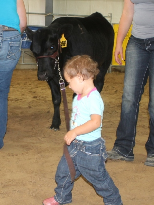 Natalie showing Bumble Bee in the Little PeeWee class. This is another great BB Cattle Co. heifer.