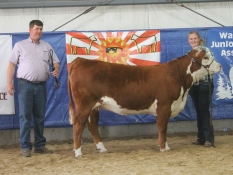 Whitney with the grand champion heifer. She is from BB Cattle Co, for more heifers like her go to www.bbcattle.com