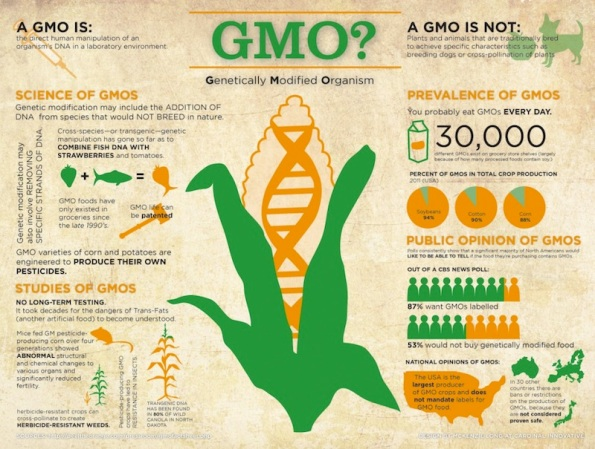 What-is-a-GMO