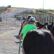 Kids practicing showing July 2019-1