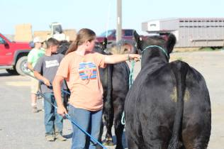 Kids practicing showing July 2019