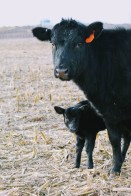 727 and calf- Feb 2020