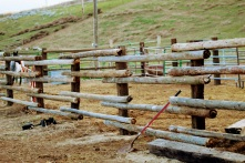 Corral fence March 2020