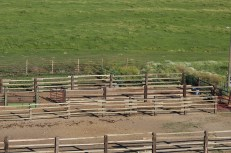 Continuous Fence July 2020